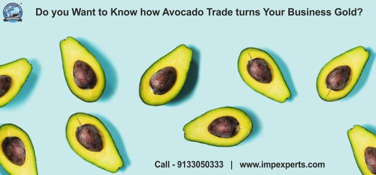 Avocado trade